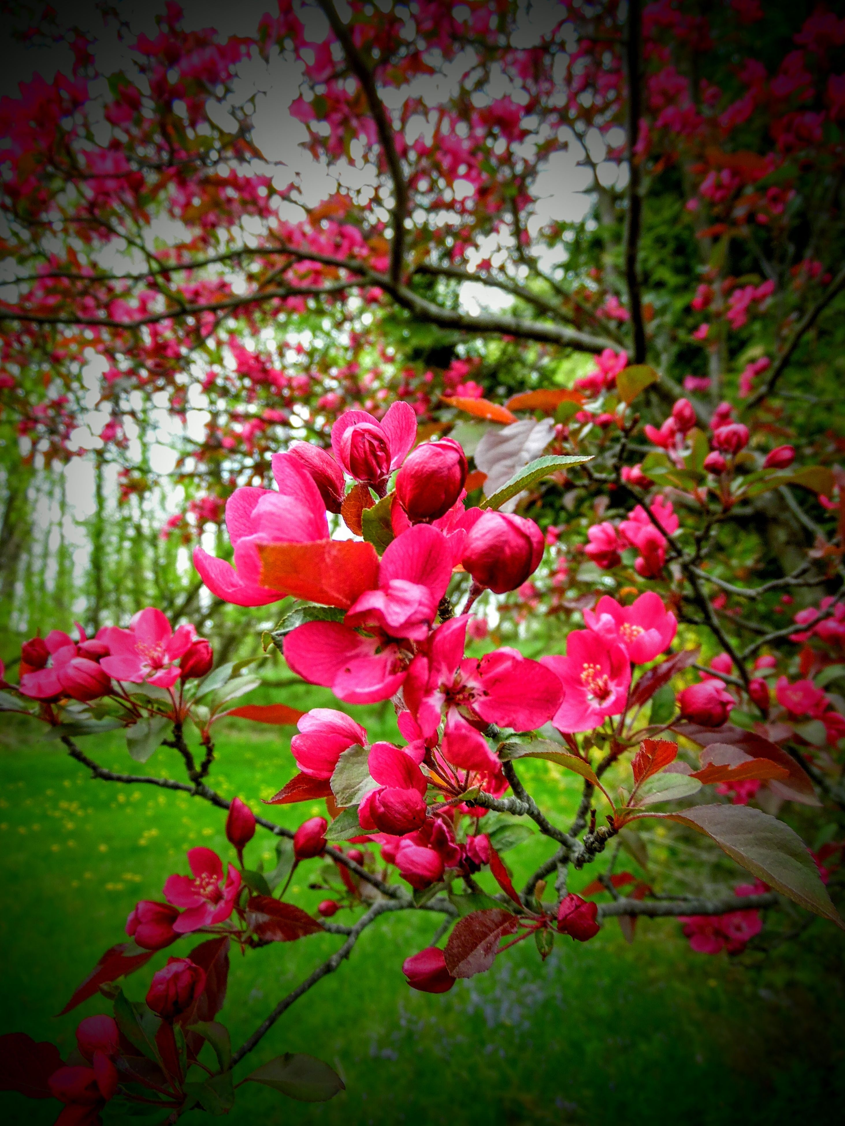 flower, nature, fragility, beauty in nature, freshness, growth, petal, pink color, close-up, red, flower head, outdoors, no people, day, tree, rhododendron, water