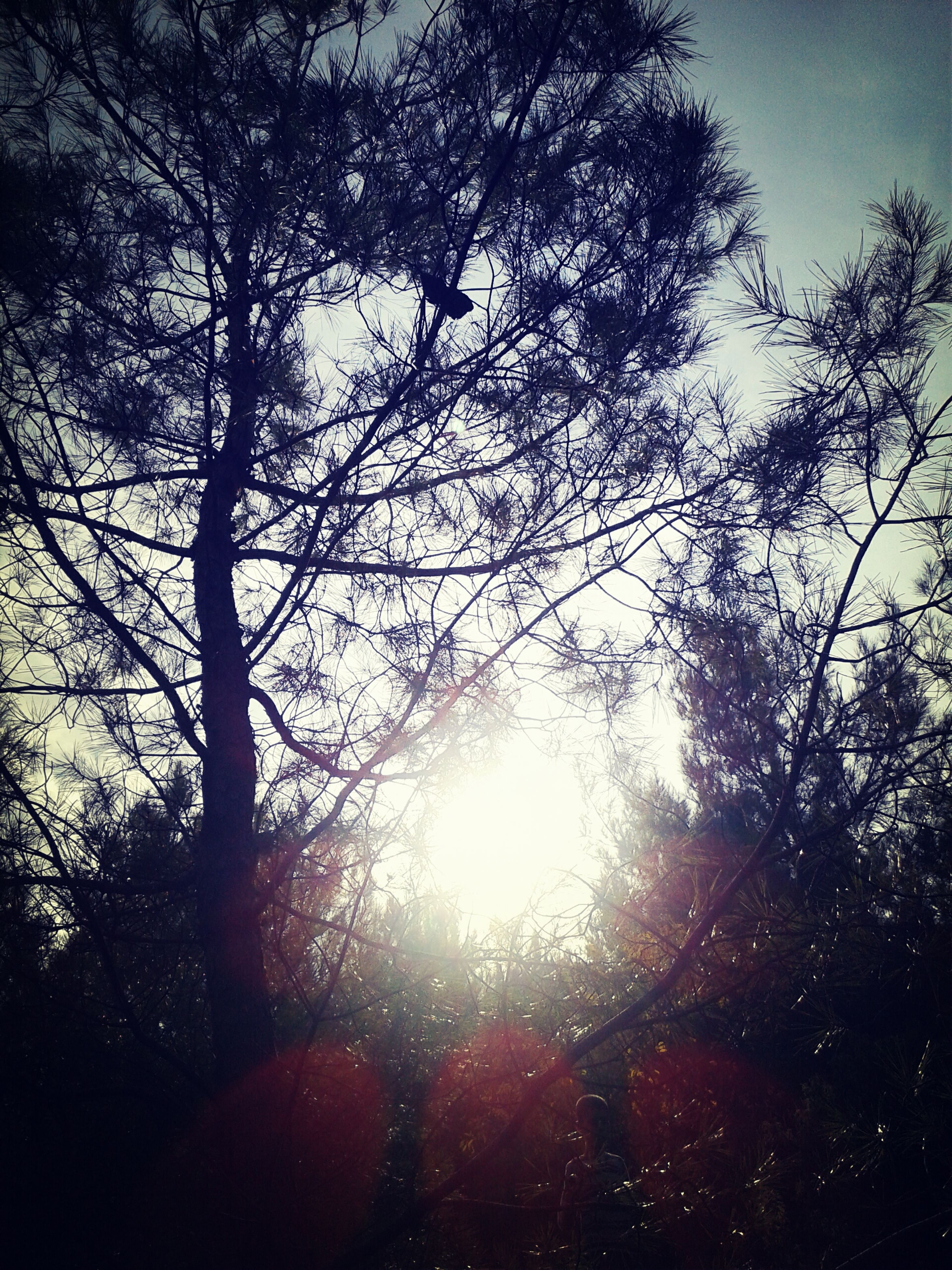 tree, sun, silhouette, low angle view, branch, tranquility, sunlight, sunbeam, growth, beauty in nature, nature, lens flare, sky, tranquil scene, scenics, back lit, sunset, outdoors, no people, forest
