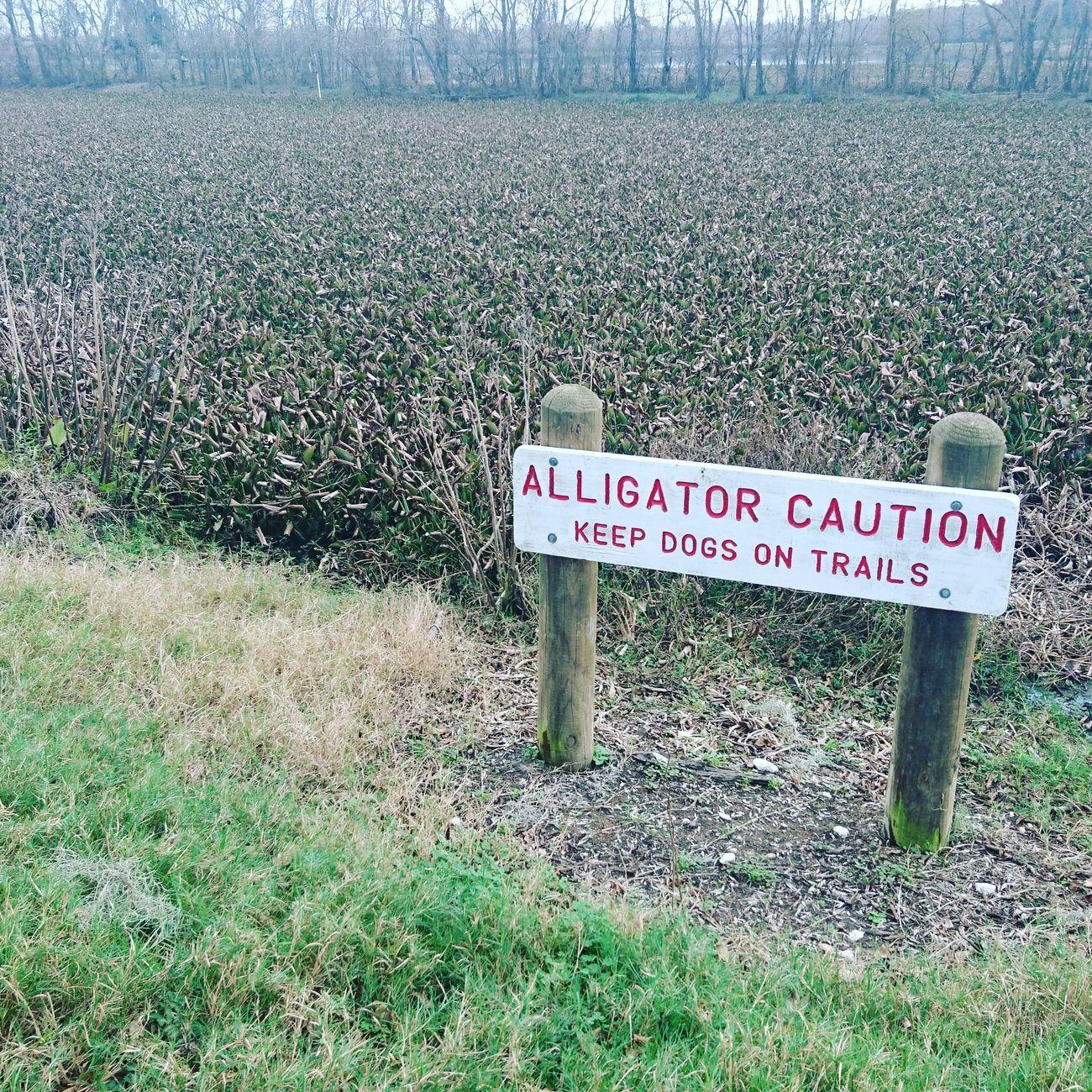 Aligator Caution Sign Texas