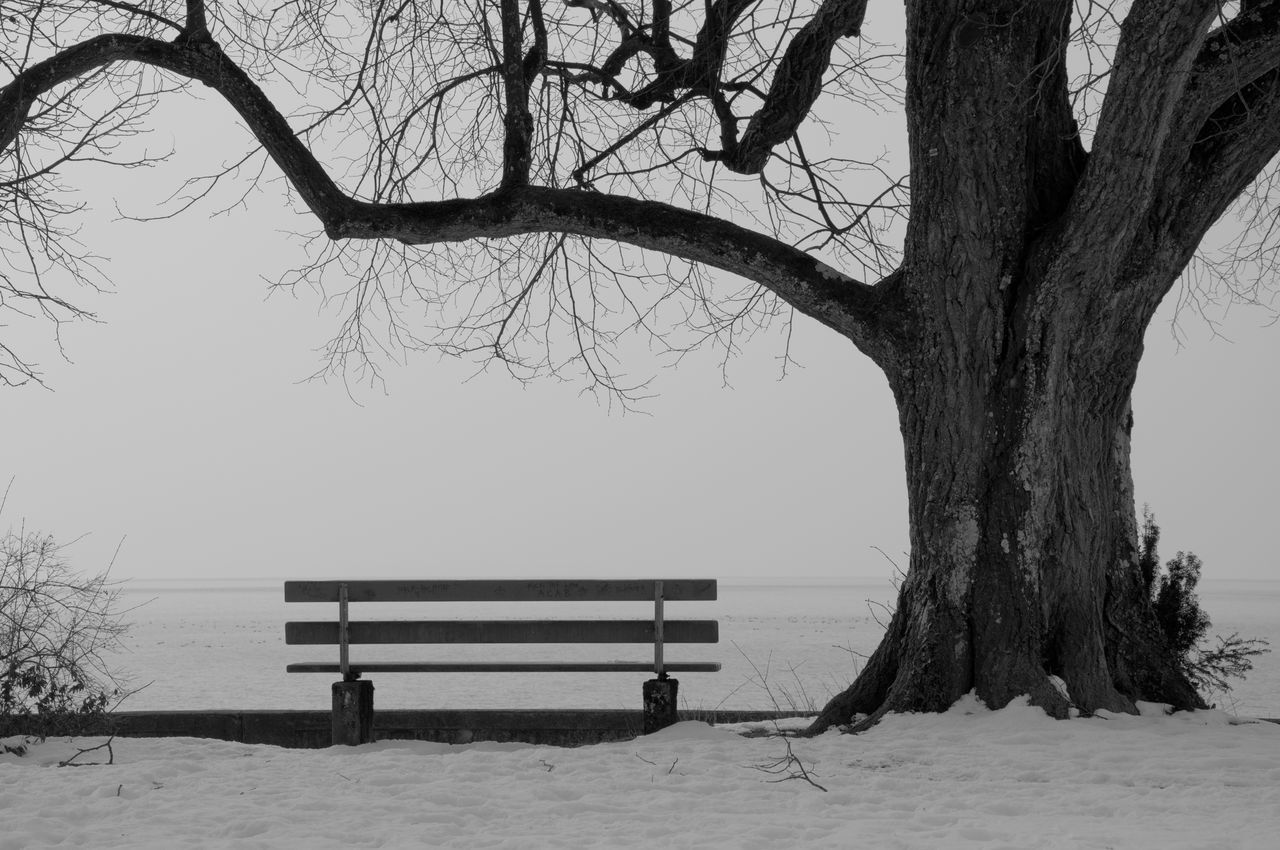 Empty Bench By Bare Tree Against Clear Sky During Winter