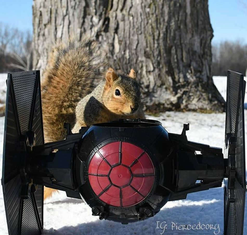Oh well there's your problem! You disconnected the ion regulators. Funwiththesquirrels Luckywiththeanimals Squirrel Squareinstapic Tiefighter Mechanic