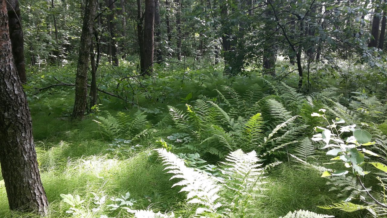 Лес папоротник Fern Forest Beauty In Nature No People Nature Tree