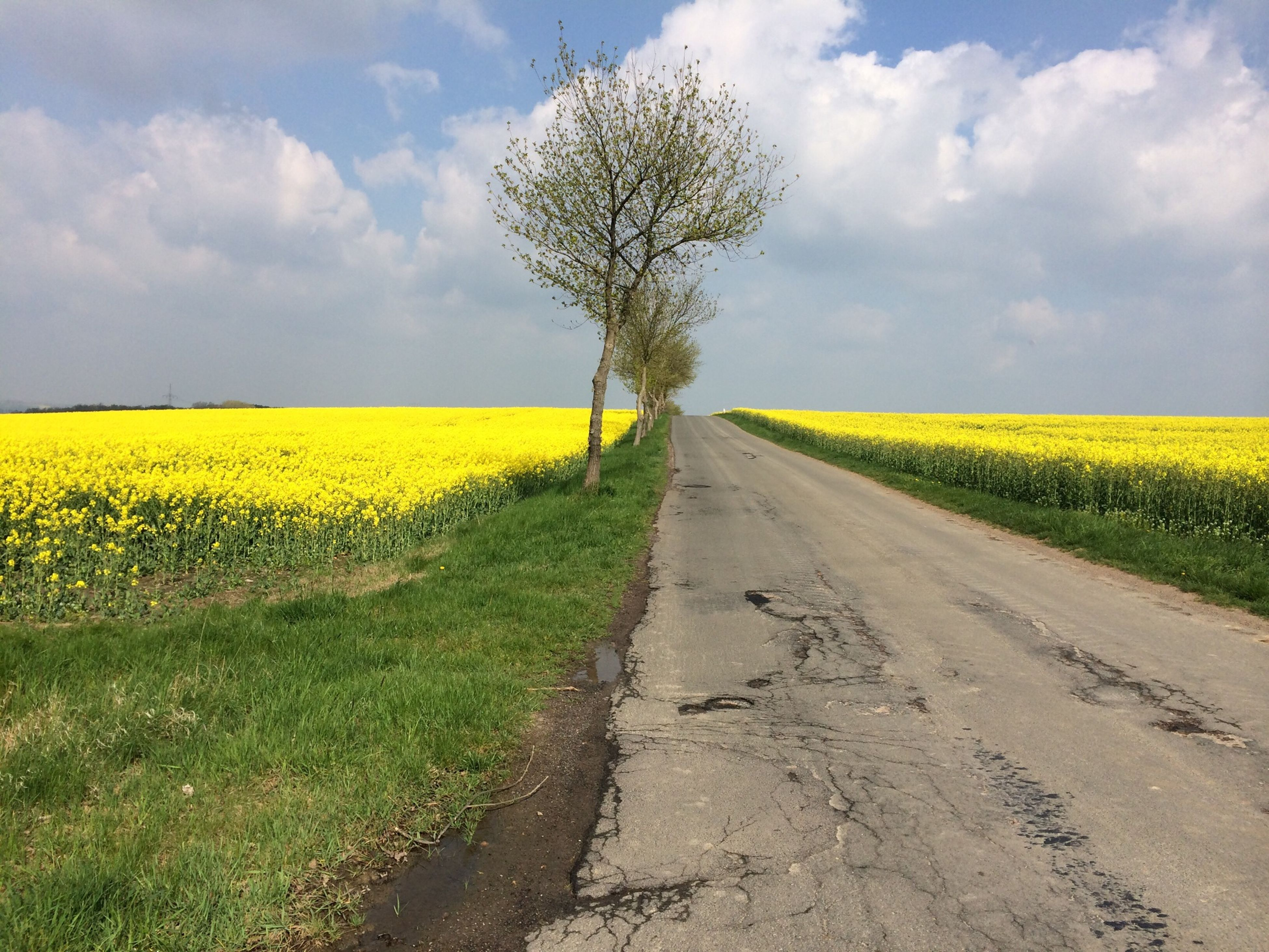 agriculture, rural scene, field, yellow, sky, landscape, farm, crop, tranquil scene, growth, tranquility, beauty in nature, the way forward, cultivated land, nature, scenics, cloud - sky, diminishing perspective, oilseed rape, cloud