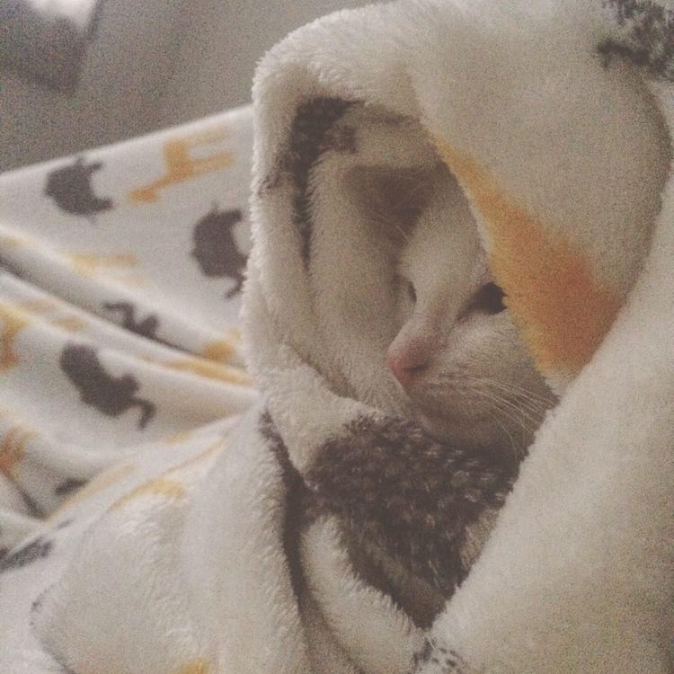 Tarde Gris Cat Catlovers