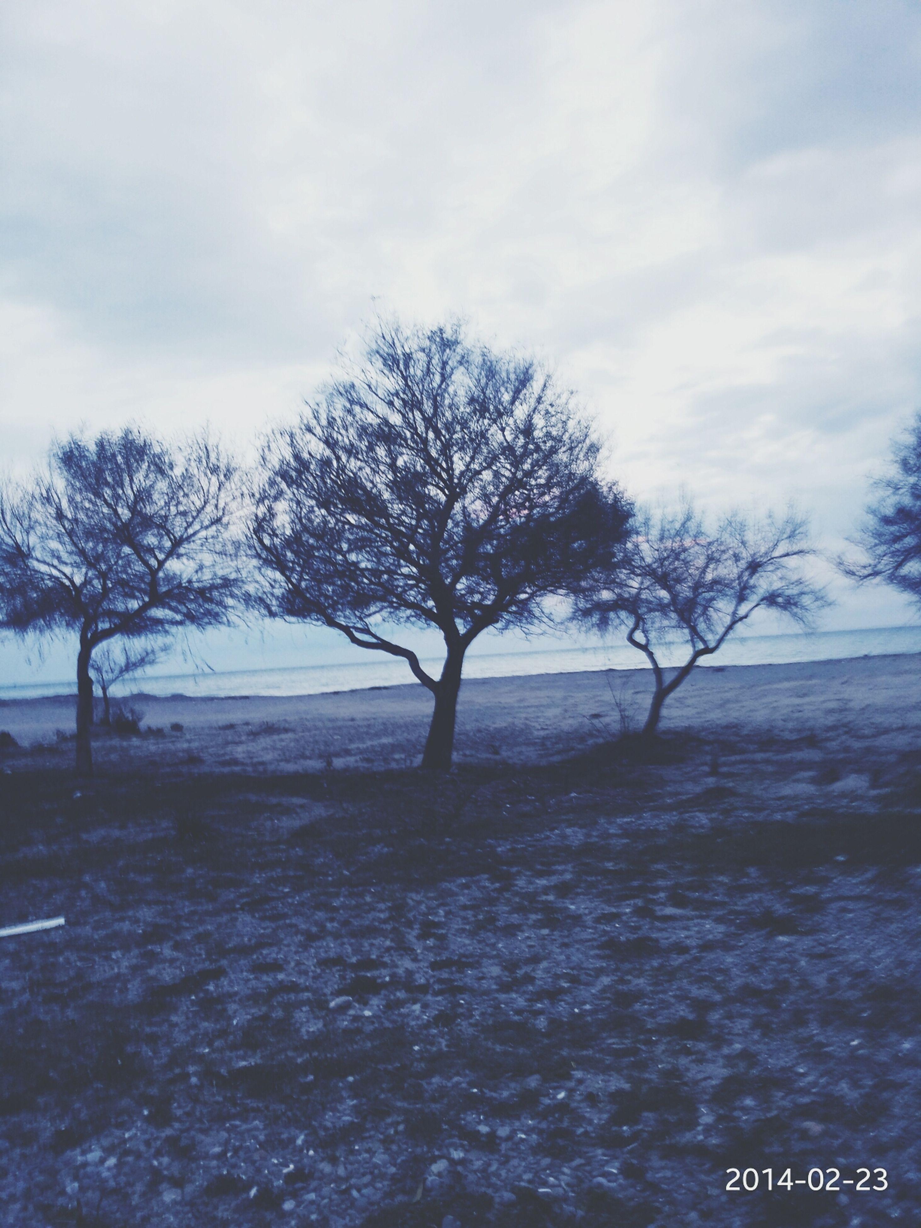 winter, snow, cold temperature, bare tree, tree, tranquility, tranquil scene, weather, sky, season, scenics, beauty in nature, nature, landscape, branch, cloud - sky, covering, field, frozen, non-urban scene