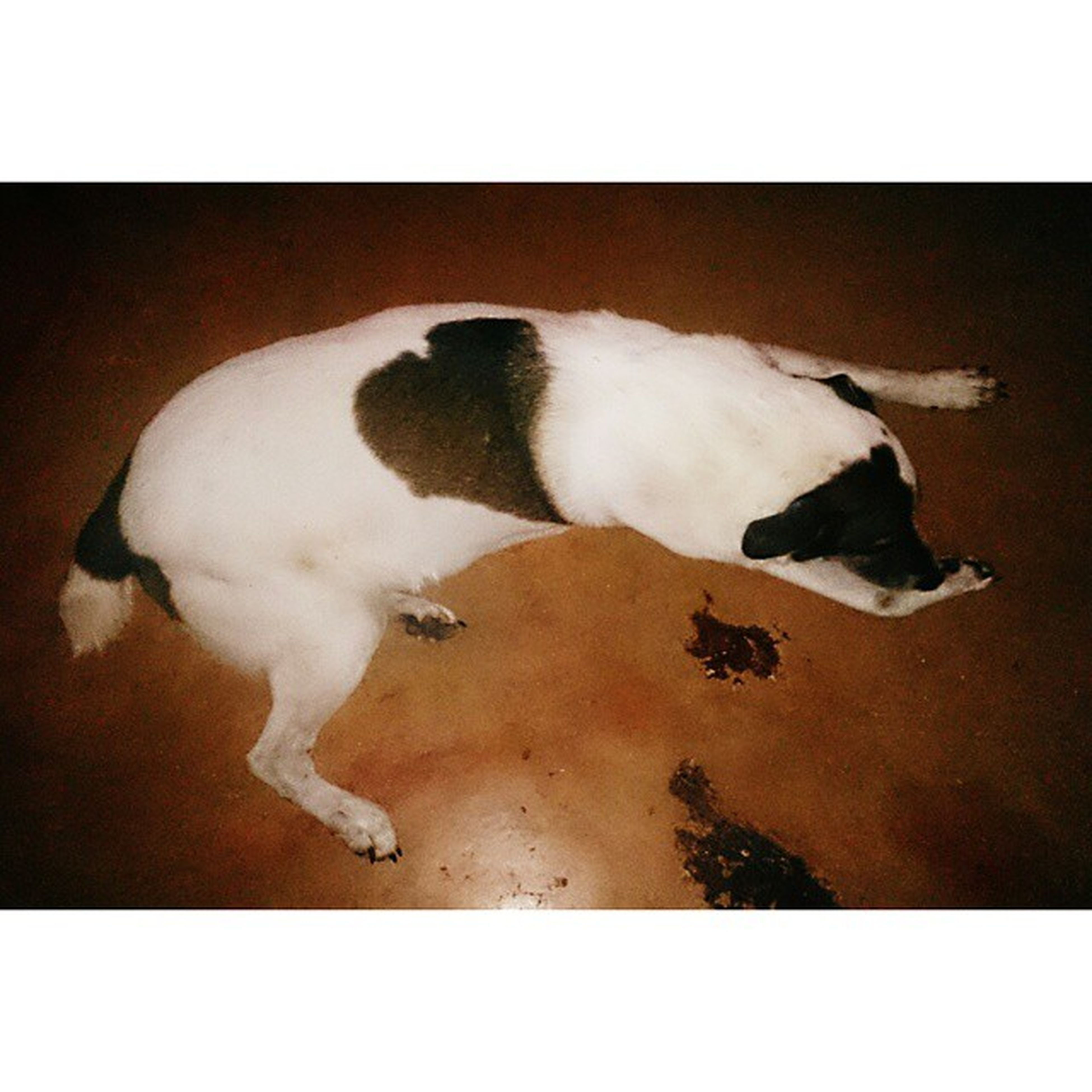 transfer print, animal themes, auto post production filter, domestic animals, pets, mammal, one animal, sleeping, indoors, high angle view, dog, relaxation, domestic cat, lying down, cat, two animals, resting, full length, white color, zoology
