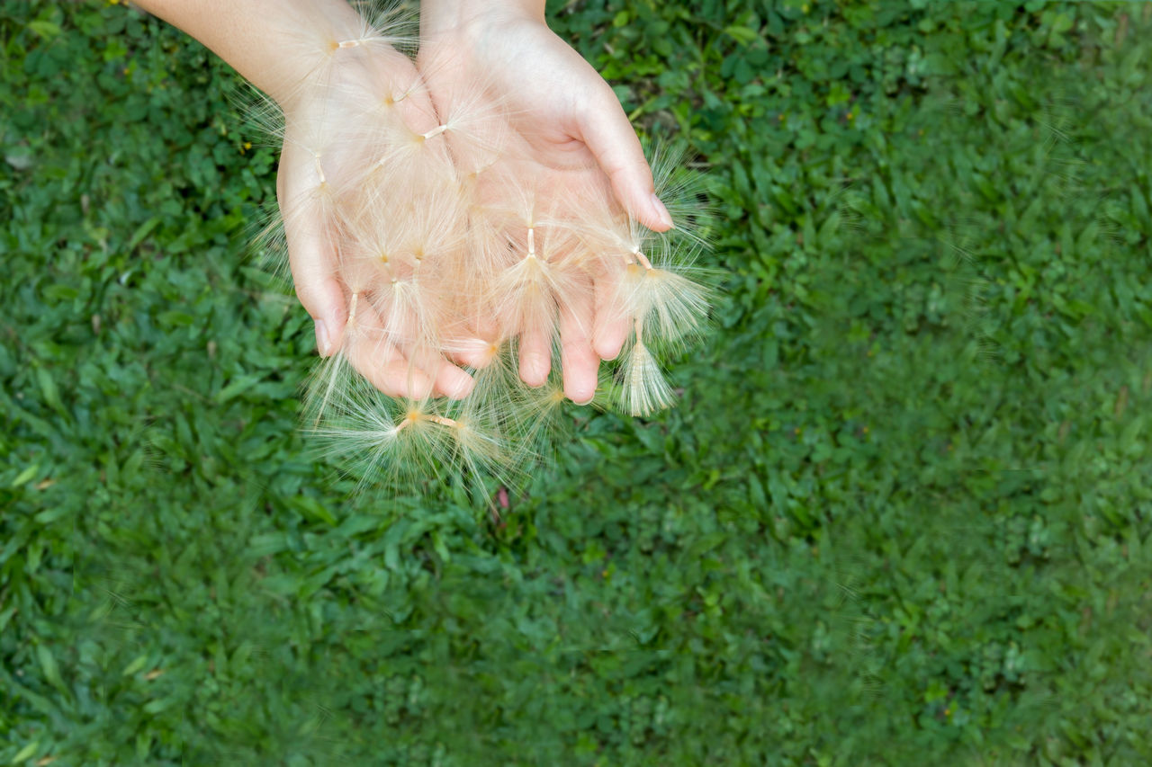 grass, human body part, green color, human hand, flower, one person, day, animal themes, outdoors, nature, child, domestic animals, mammal, children only, close-up, people