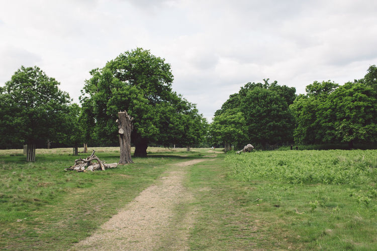 Animal Themes Beauty In Nature Cloud - Sky Cow Day Domestic Animals Elephant Field Grass Grazing Green Color Growth Landscape Livestock Mammal Nature No People One Animal Outdoors Pets Richmond Park, London Sheep Sky Tree