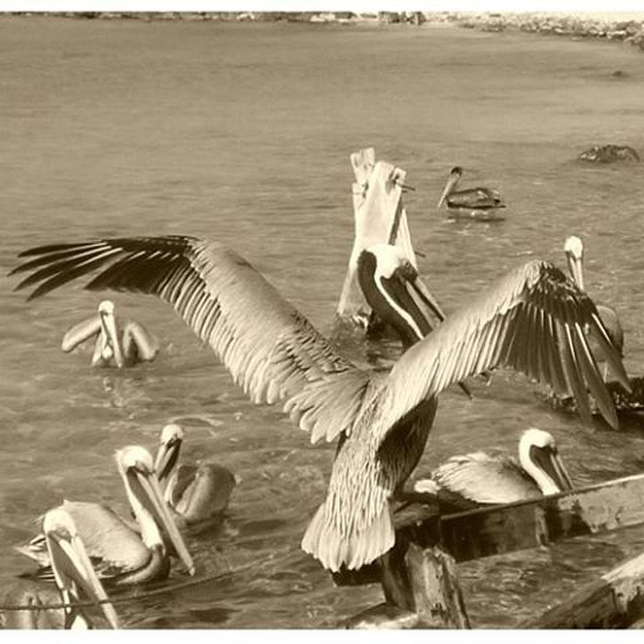 Sea 2016 Venezuela Vacation Viajandoconcedula Mochima Birdsofinstagram Nature's Diversities The Great Outdoors - 2016 EyeEm Awards
