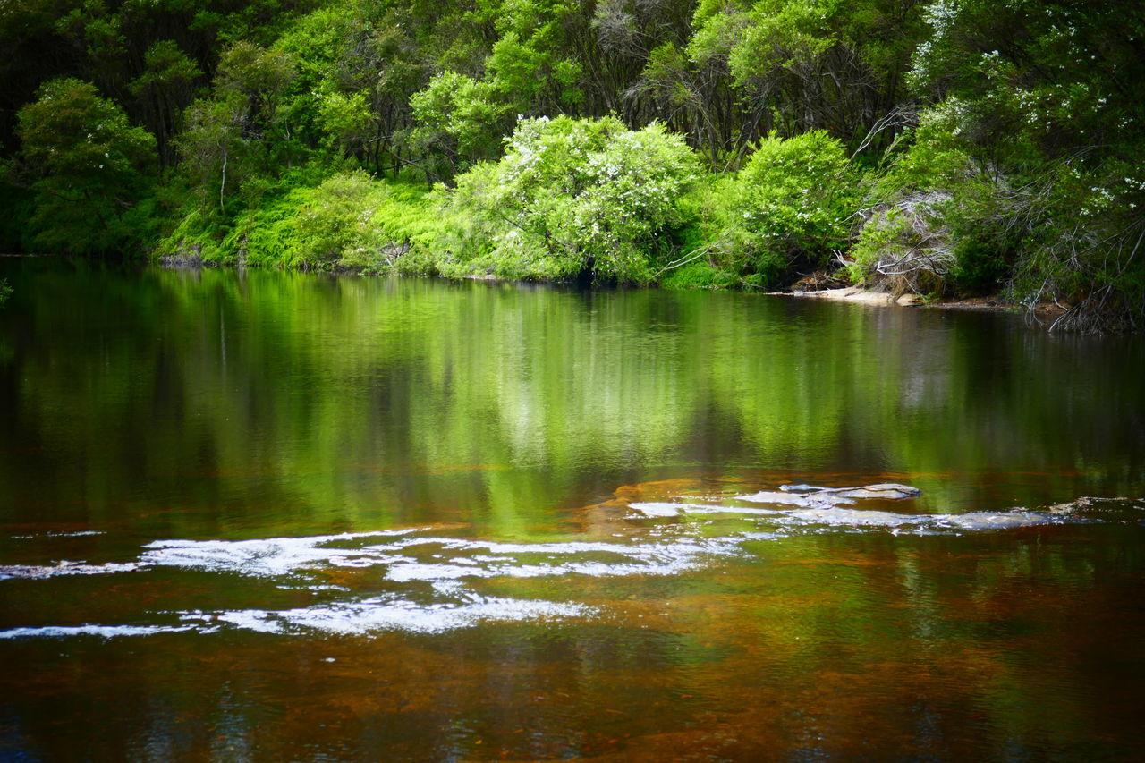 Australia Australian Landscape Bush Green Nature Nature Travel Reflection Reflections In The Water River Serinity Water EyeEmNewHere Travel Photography Australian Bush New South Wales