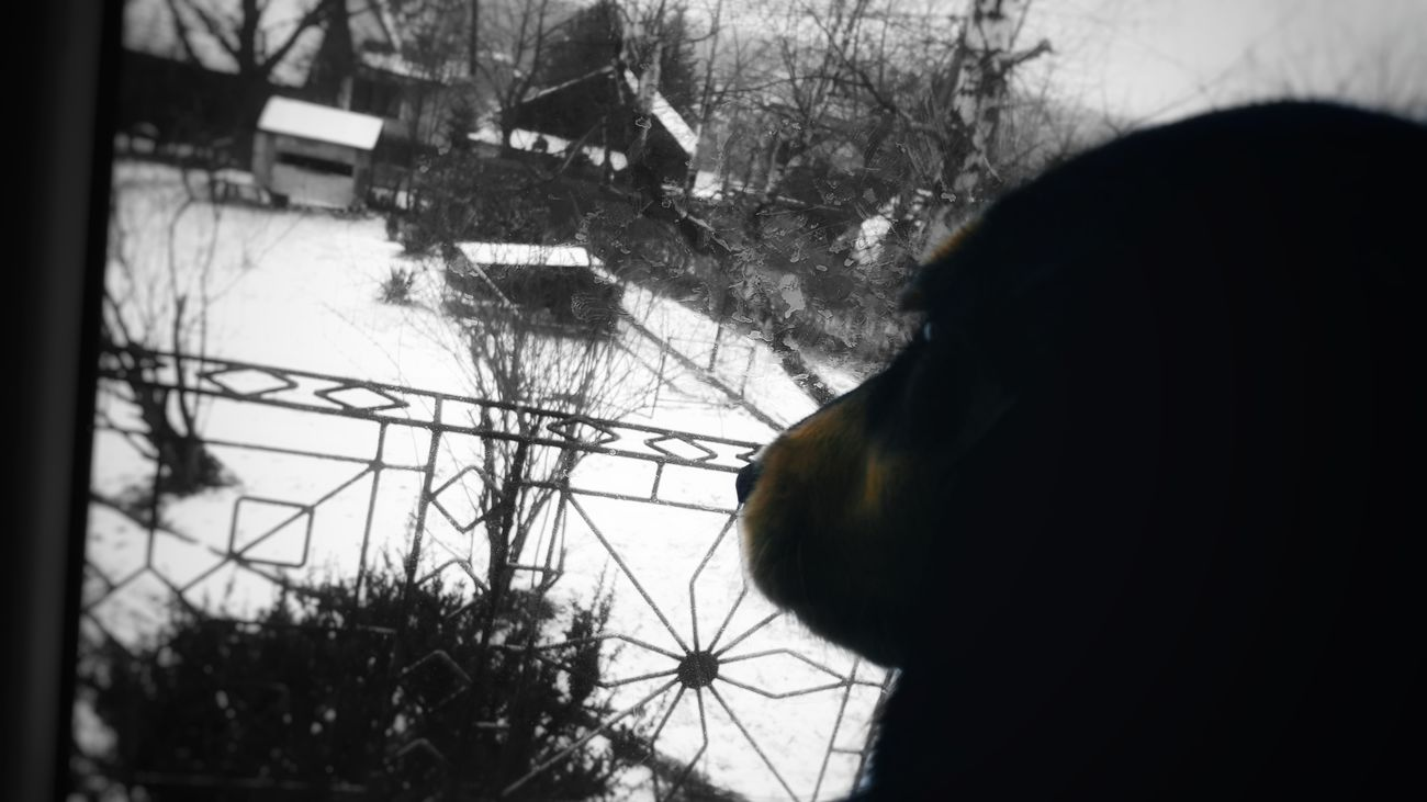 Melancholy mood Cold Temperature Day Dog Nature Poland Silhouette Snow Window Winter
