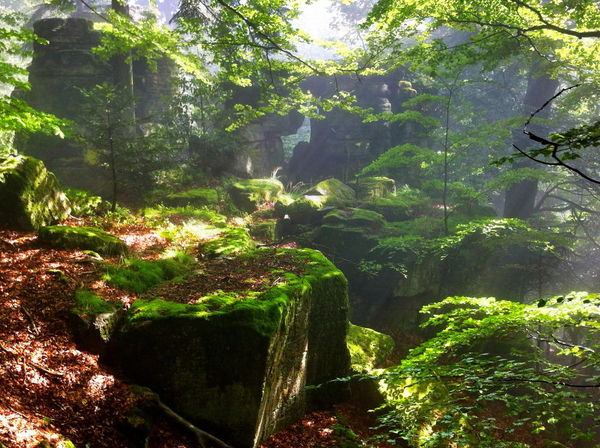 Creative Light And Shadow Black Forest mystic forest Live For The Story