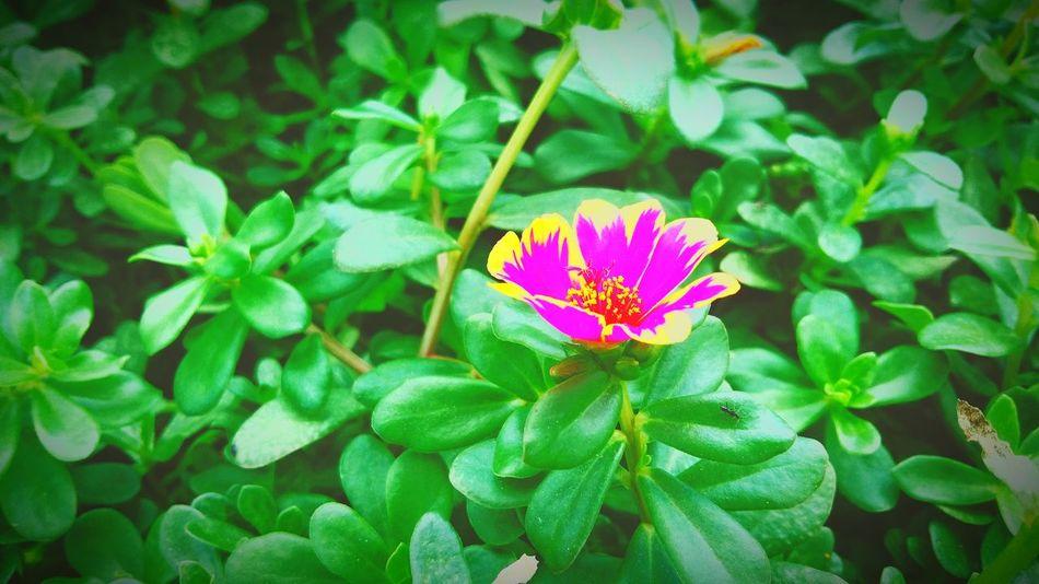 Flowers Fuxiaflowers