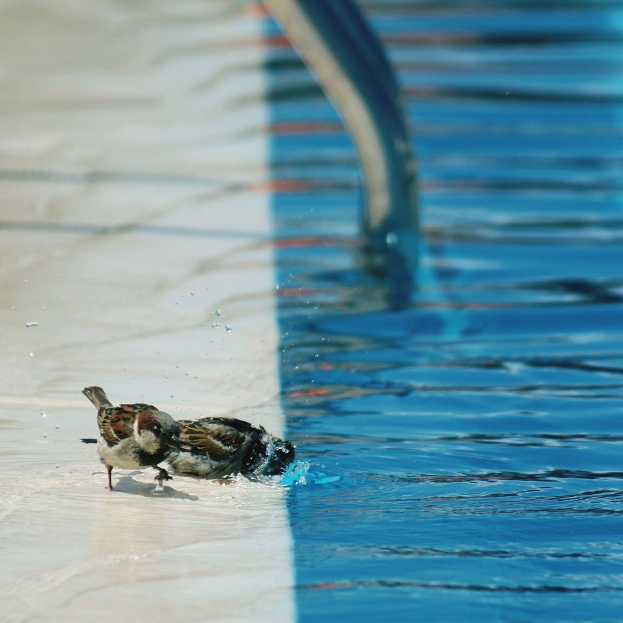 Beautiful stock photos of pool, Animal Themes, Animals In The Wild, Beauty In Nature, Bird
