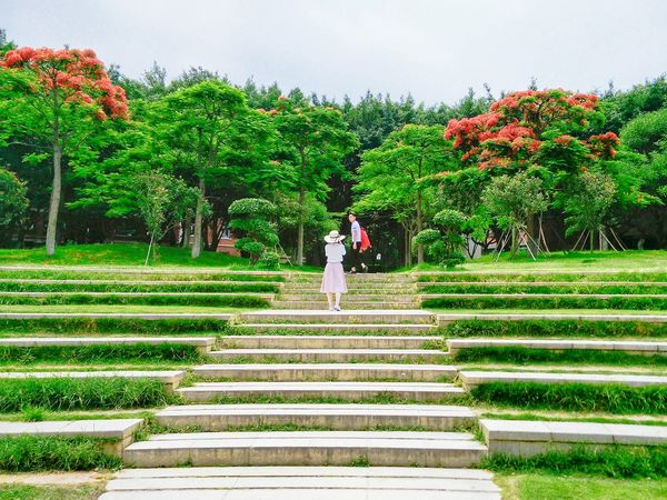 Green Green Green!  At University On Campus Green Trees 鳳凰木 Steps Stairs Flame Tree City Trees University 鳳凰花 鳳凰花開的季節