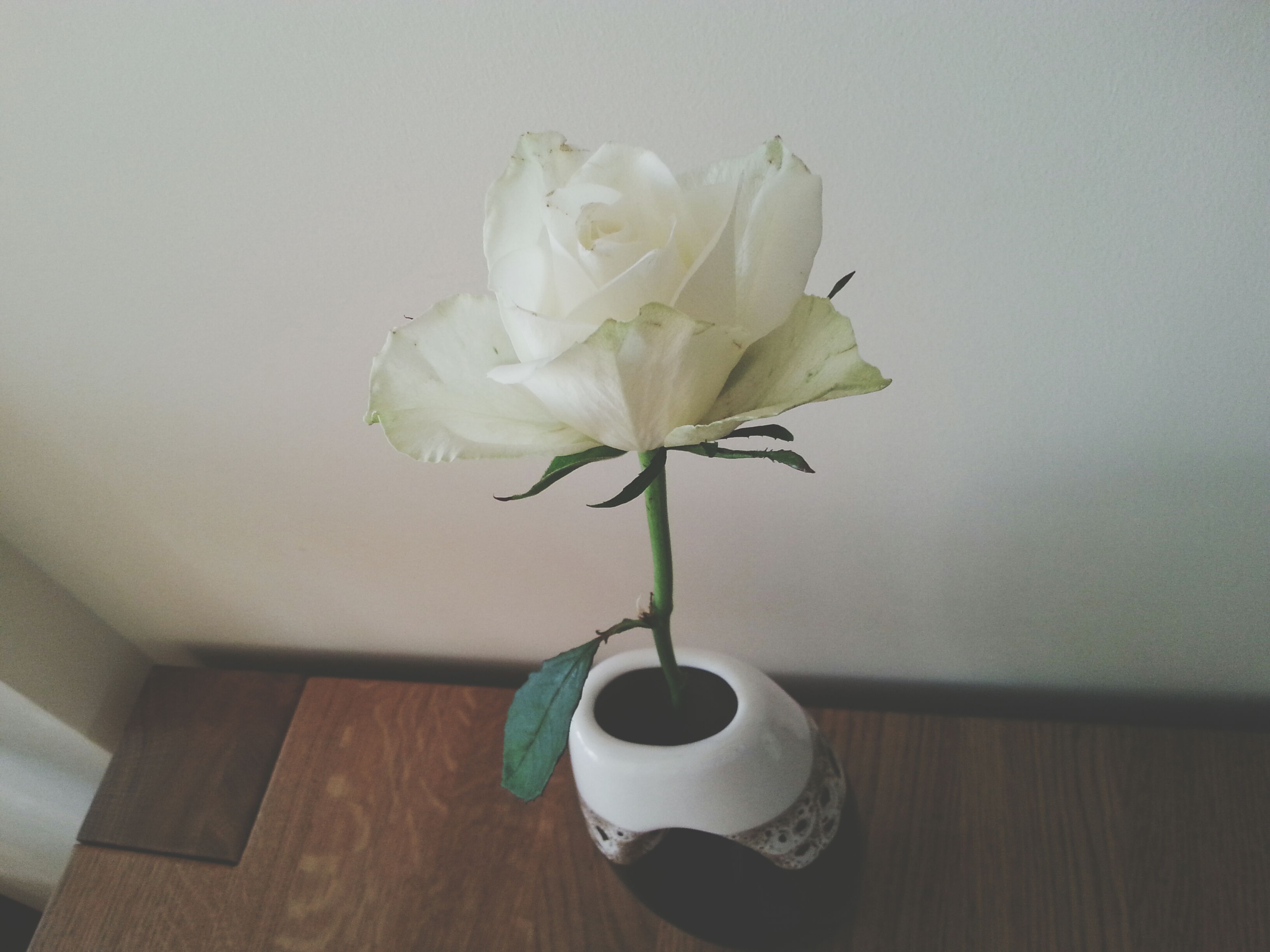 flower, indoors, vase, freshness, table, fragility, petal, flower head, white color, still life, close-up, home interior, decoration, stem, wall - building feature, rose - flower, flower arrangement, no people, plant, beauty in nature