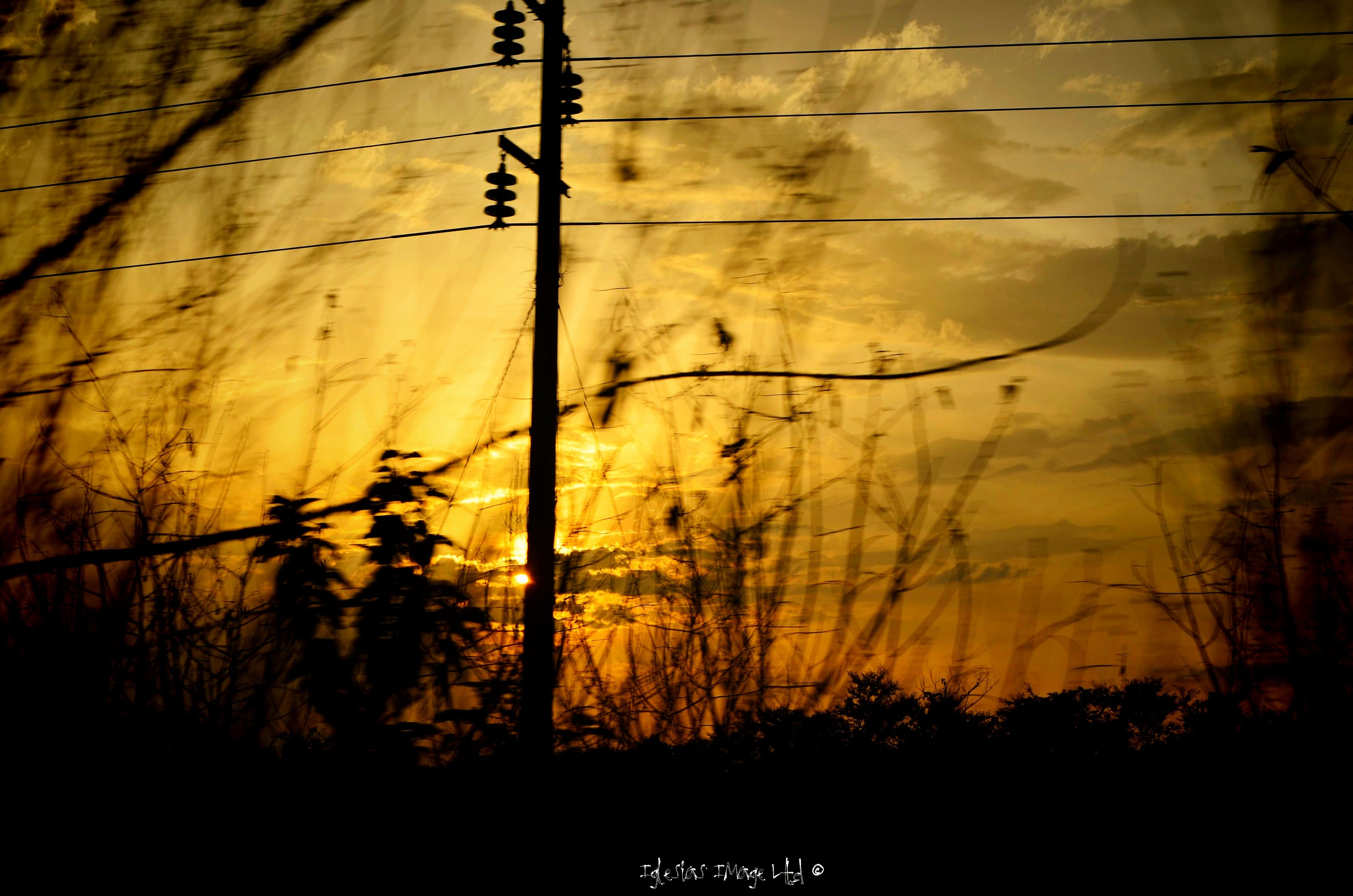 tree, silhouette, sunset, branch, tranquility, power line, nature, bare tree, growth, beauty in nature, forest, tranquil scene, orange color, low angle view, scenics, no people, outdoors, tree trunk, electricity pylon, sky