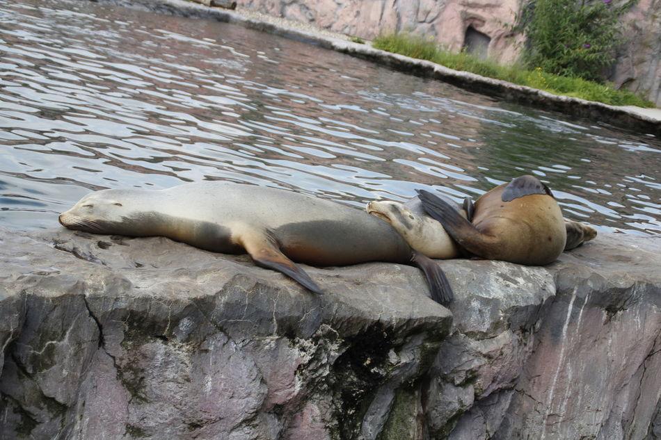 Beautiful stock photos of seal, Animal Themes, Animals In Captivity, Aquatic Mammal, Day
