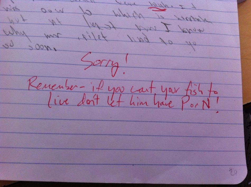 Stupid Teacher