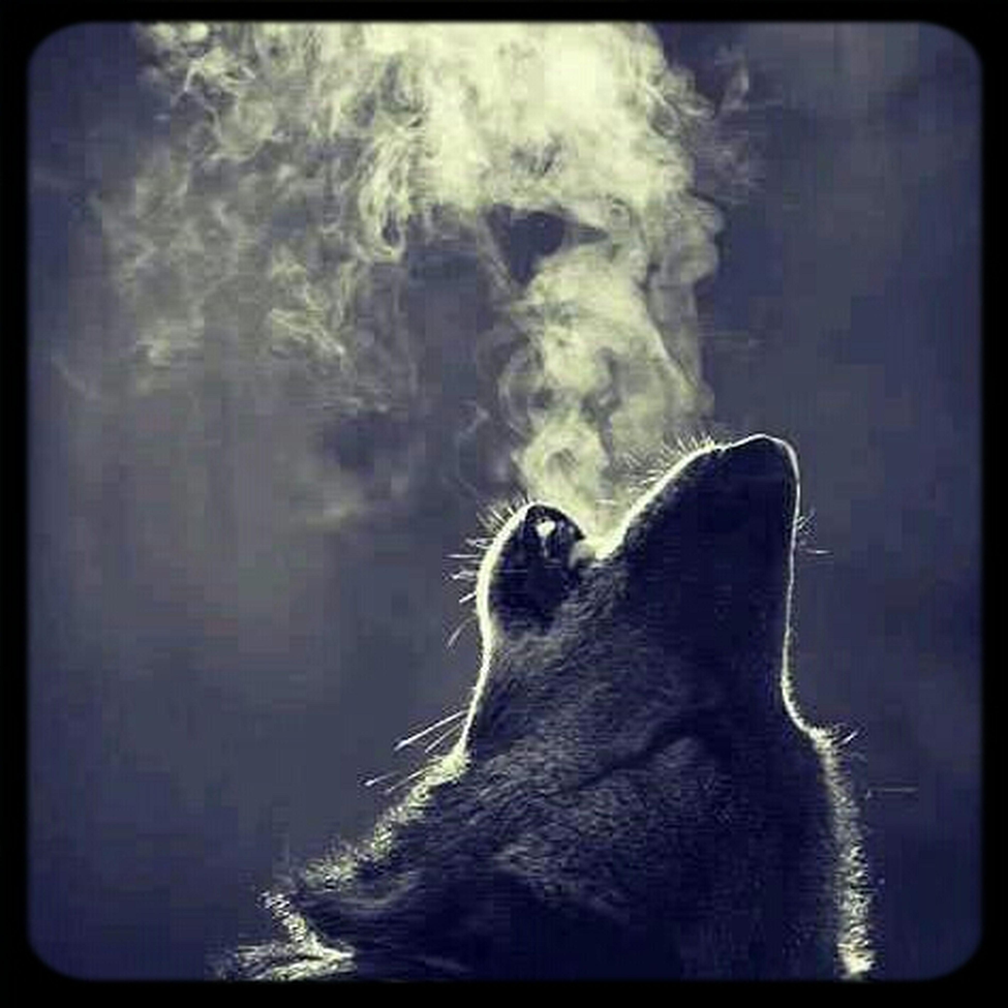 Nice Wolf Pic