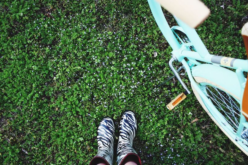 First post of 2016! I am beginning a new series for spring since it is finally here! Again, thanks to all my supporters and I promise I will be posting lots more like this soon. ~Campbell🌞💐 Taking Photos Flowers Rainy Days Rain Rainboots Rainboot Zebra Bike Bikes Biking Hello 2k16 Colors