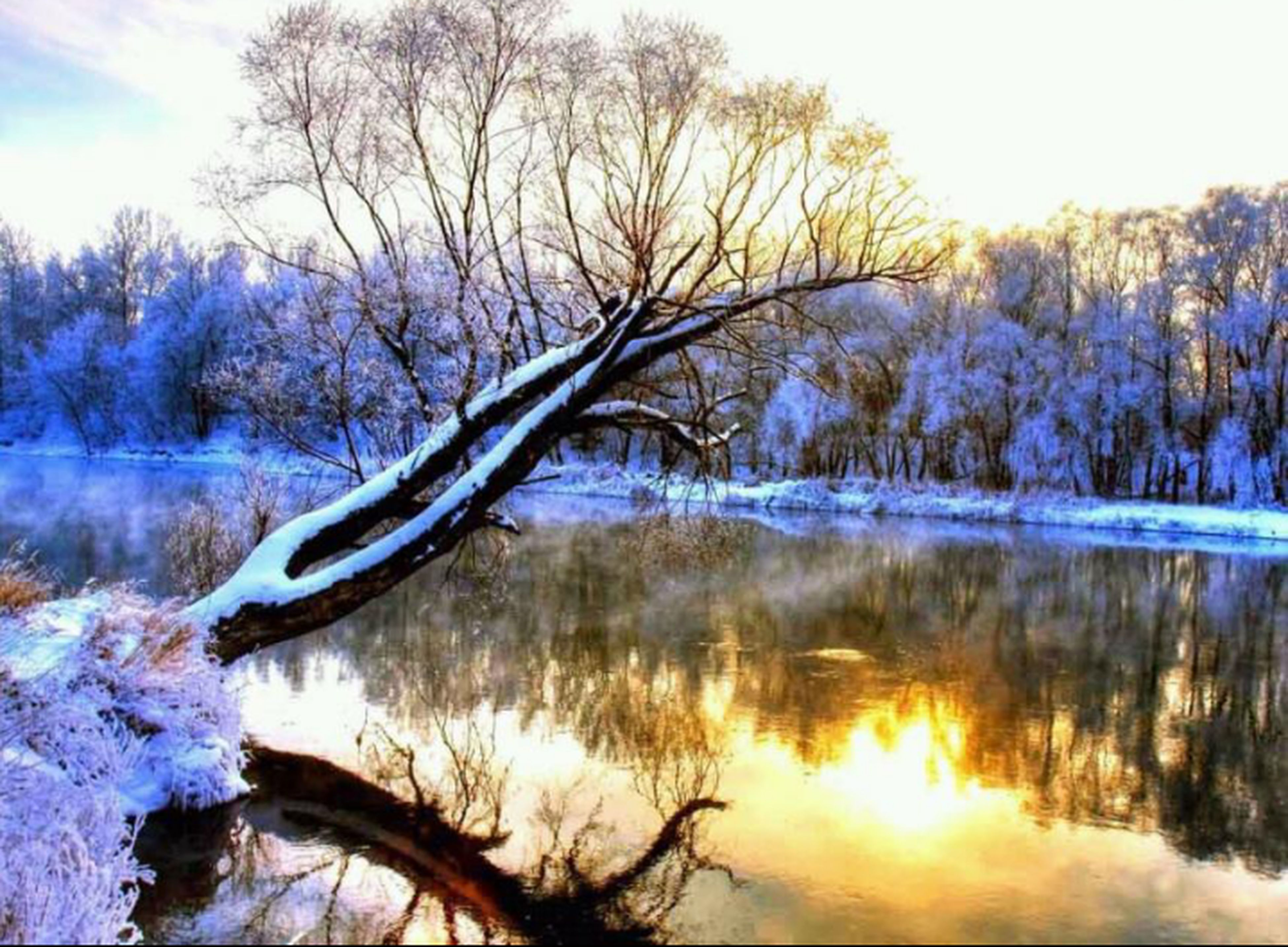 tree, lake, water, tranquility, tranquil scene, reflection, beauty in nature, scenics, nature, bare tree, sky, branch, waterfront, idyllic, non-urban scene, forest, day, outdoors, blue, no people