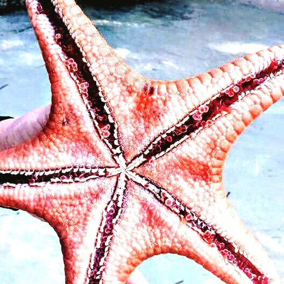Close-up Secondeyeemphoto Starfish At Beach Beauty In Nature Summer Beach EyeEmNewHere