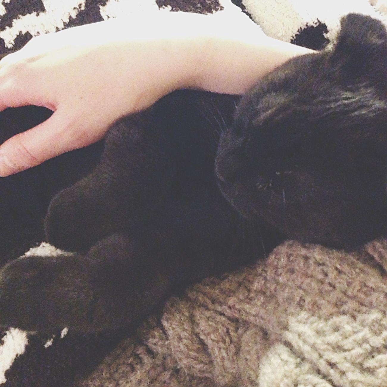おやすみ 黒猫 スコティッシュフォールド 仔猫 💤
