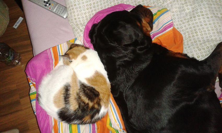 Zwei Wie Hund Und Katze Lilli Mit Freya In Germany In Deutschland Nap Time Kleines Nickerchen.  Sweet Dreams Night Night, Sleep Tight