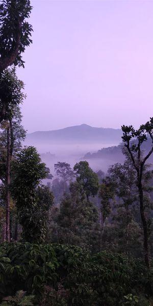 Misty Mountain Peaceful Morning View Kudremukh Karnataka Oneplus5t Tree Landscape Nature Beauty In Nature Mountain Purple Sunset Fog Outdoors Sky