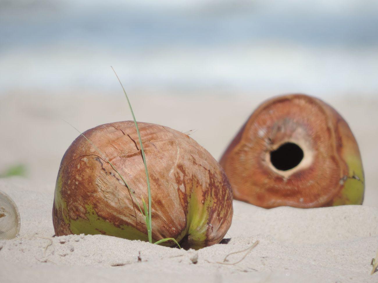 Um coco esquecido na areia do Guaibim Bahia Day Sunset Nature Perspective Close-up Composition
