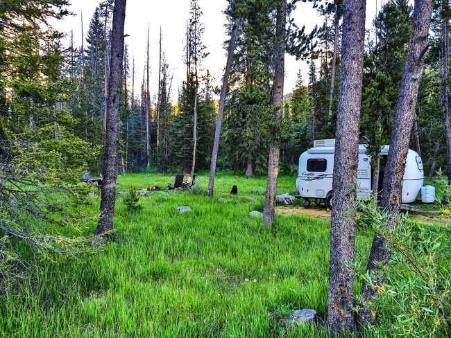 Woman solo camping with her dog in a fiberglass trailer. Beauty In Nature Camp Sidney Dew Clear Sky Day Dog Field Forest Grass Grassy Green Color Growth Landscape Lush Foliage Nature Outdoors Plant Sawtooth Mountains Solo Camping Trailer Tranquil Scene Tranquility Tree Tree Trunk Woman Camp