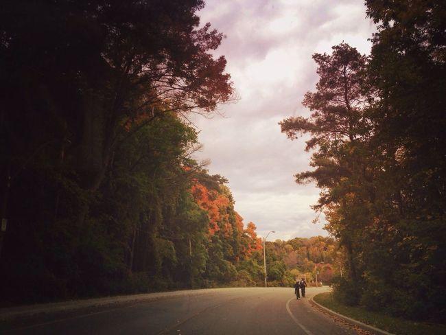 Autumn Ride Enjoying The Sights Autumn Colors EyeEm Best Shots Streetphotography
