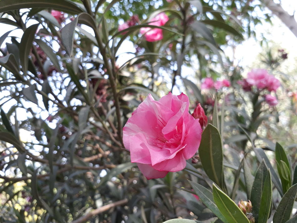 Nature_collection Pink Color Closeup Photography