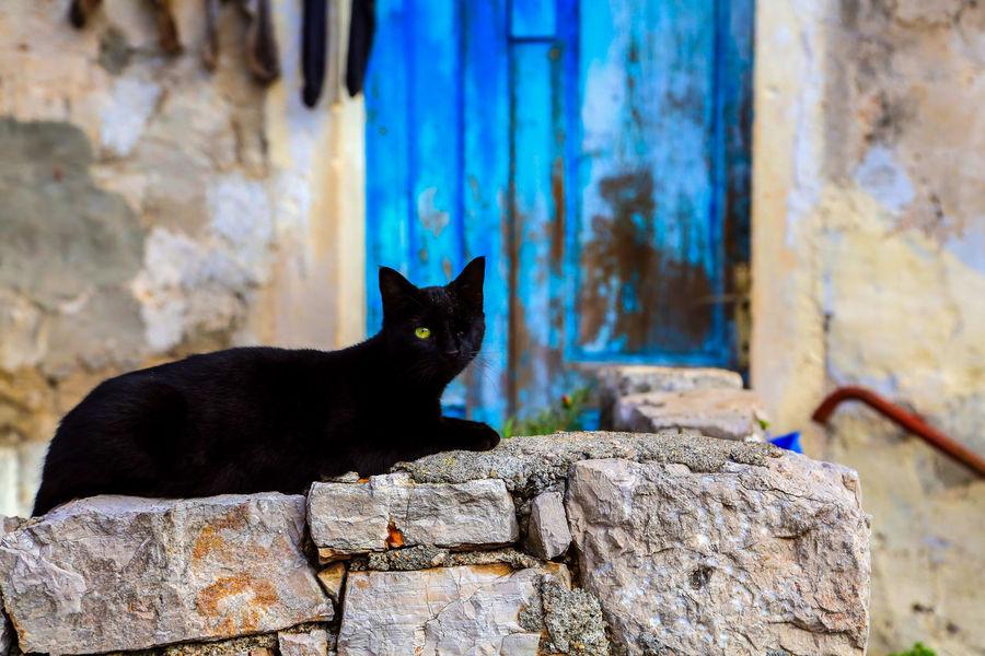 Black Cats One Animal Domestic Cat Animals Hunting Mammal Animal Black Color Feline Outdoors