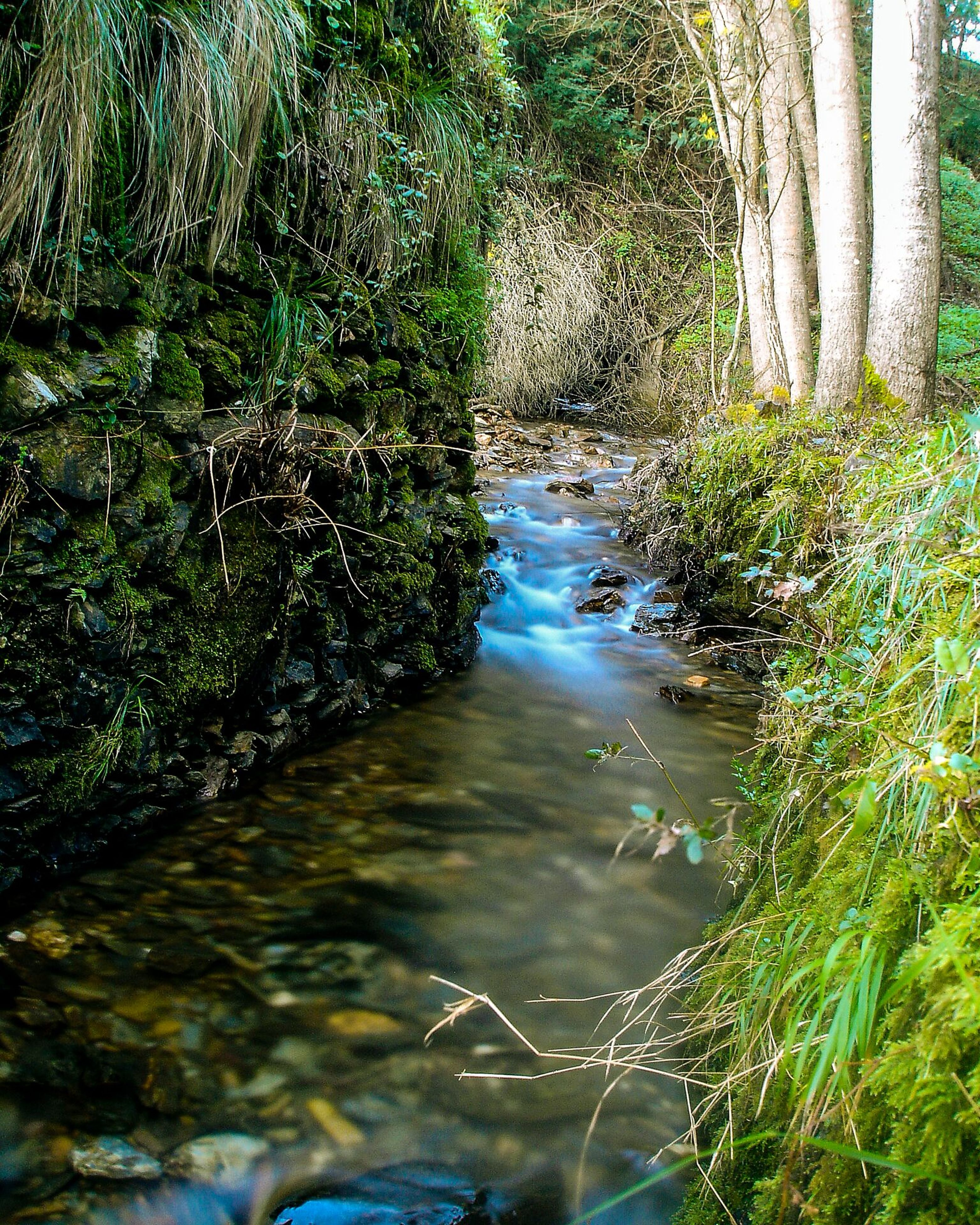 water, tree, stream, forest, tranquility, nature, reflection, green color, tranquil scene, flowing water, growth, beauty in nature, scenics, flowing, plant, waterfront, day, river, sunlight, high angle view