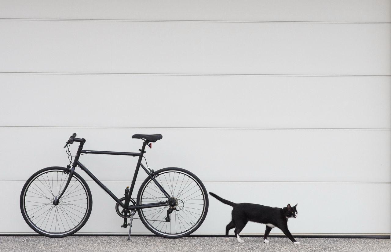 Bike Blackandwhite Cat Cats Cycling Tokyobike Weekend