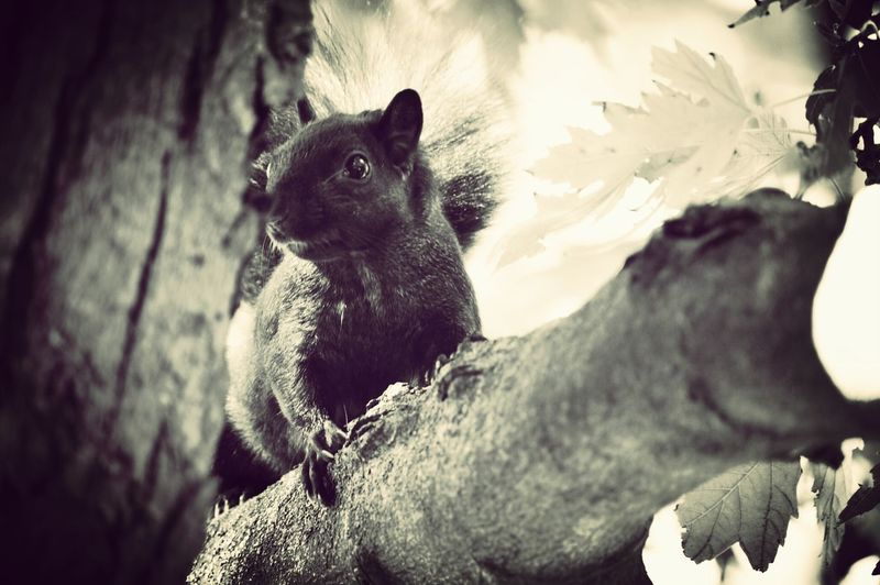 Nature Photography Fall2014 Squirrel Tree Cute