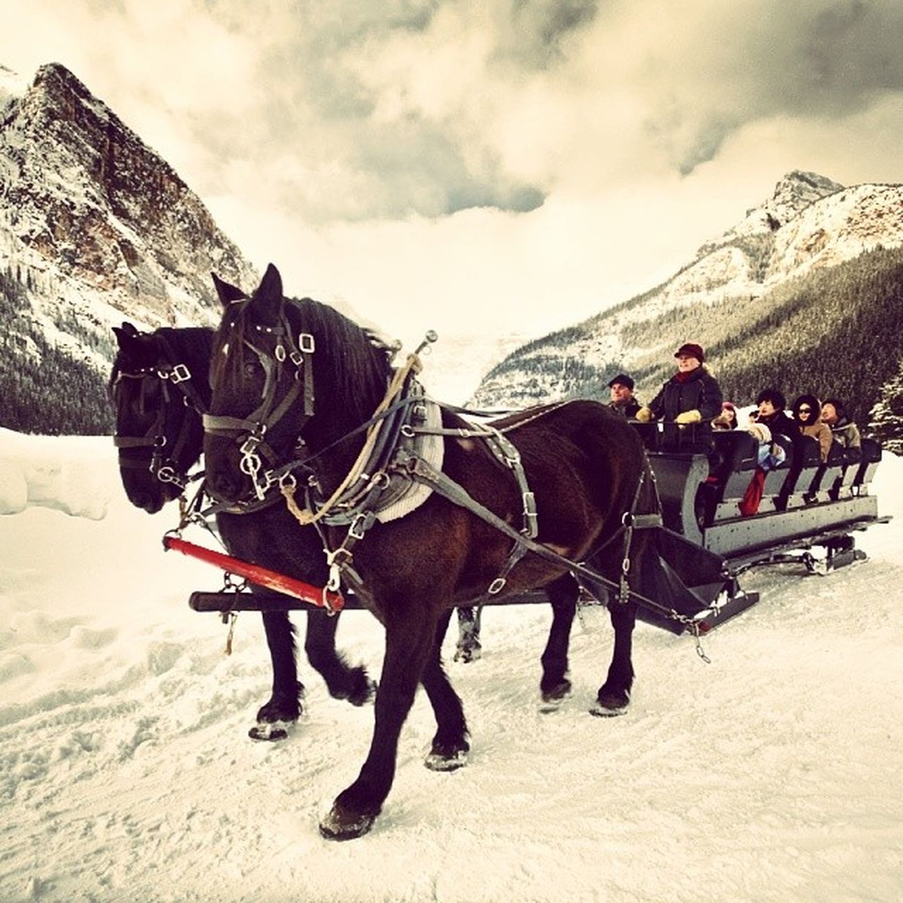 Amongst the many guilty pleasures of Banff, a sleigh ride remains the most exotic.