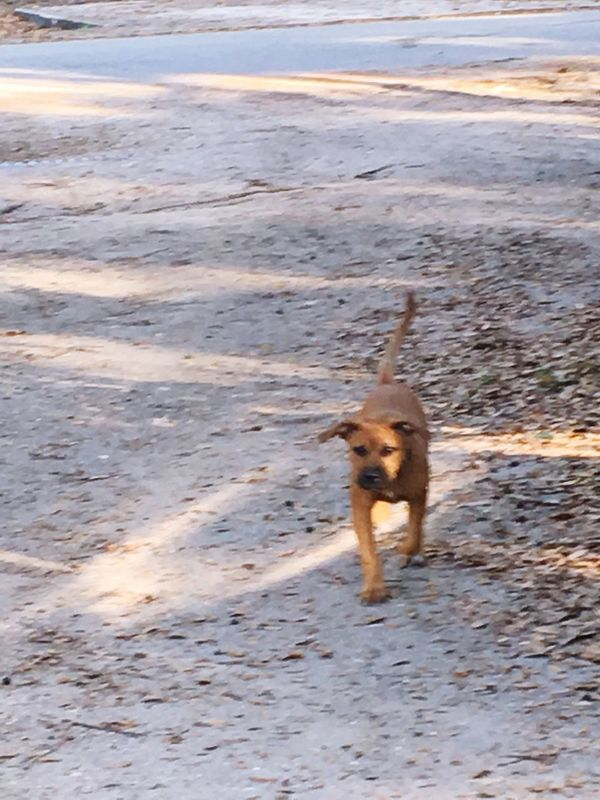 Dog Pets One Animal Beach Animal Themes Domestic Animals Motion Running Nature No People