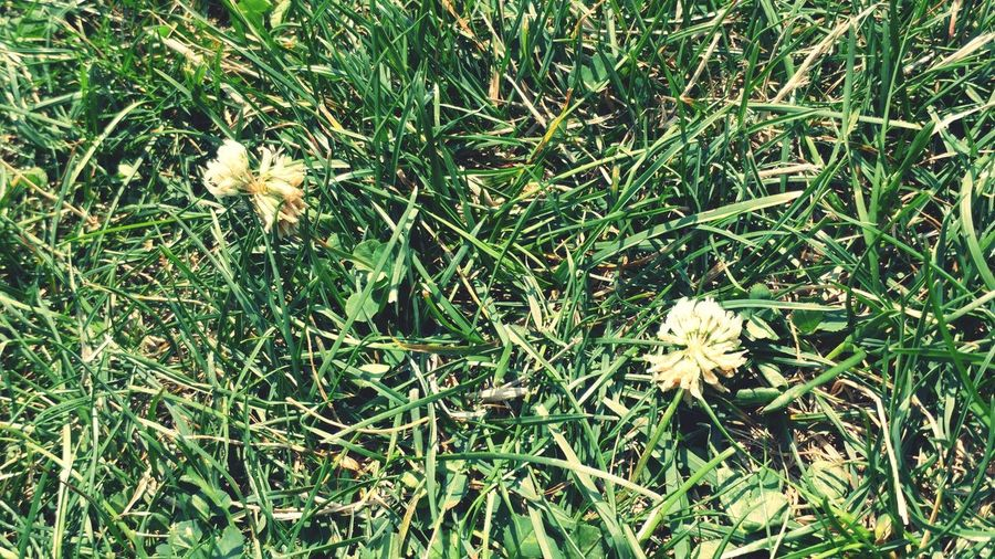 Grass Nature Growth Field Plant No People Flower Outdoors Green Color Day Beauty In Nature Close-up Fragility Freshness Fall Dying Flowers Dyingweeds Circleoflife Weeds Deadweed EyeEm Selects