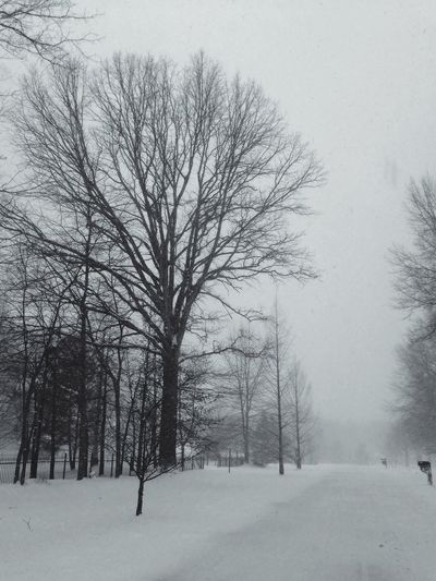 Wintertime Blackandwhite Don Filter My Neighborhood