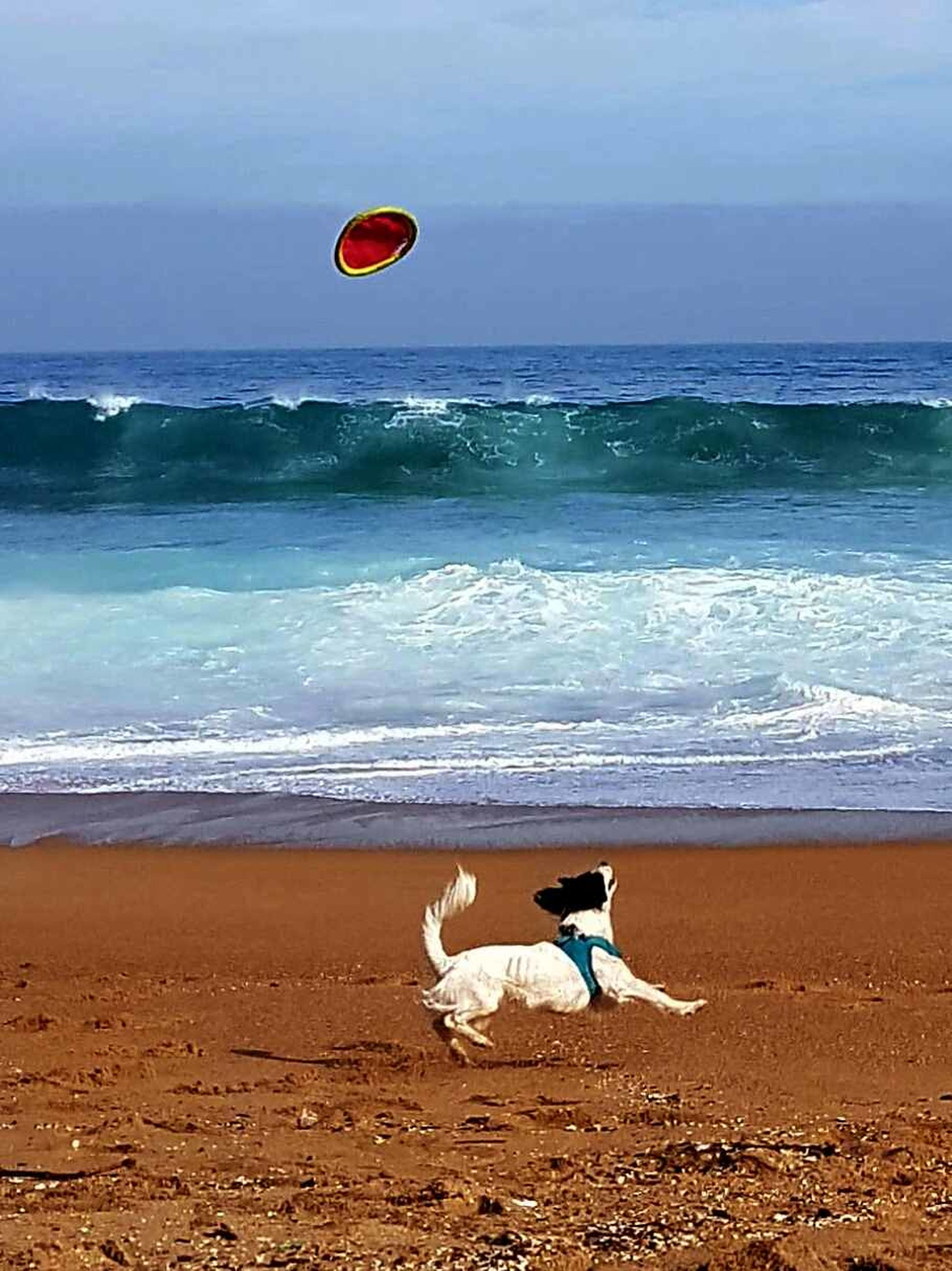 sea, beach, water, mid-air, wave, nature, horizon over water, sand, playing, motion, leisure activity, sport, outdoors, day, one person, beauty in nature, sky, flying, basketball - sport, animal themes, people