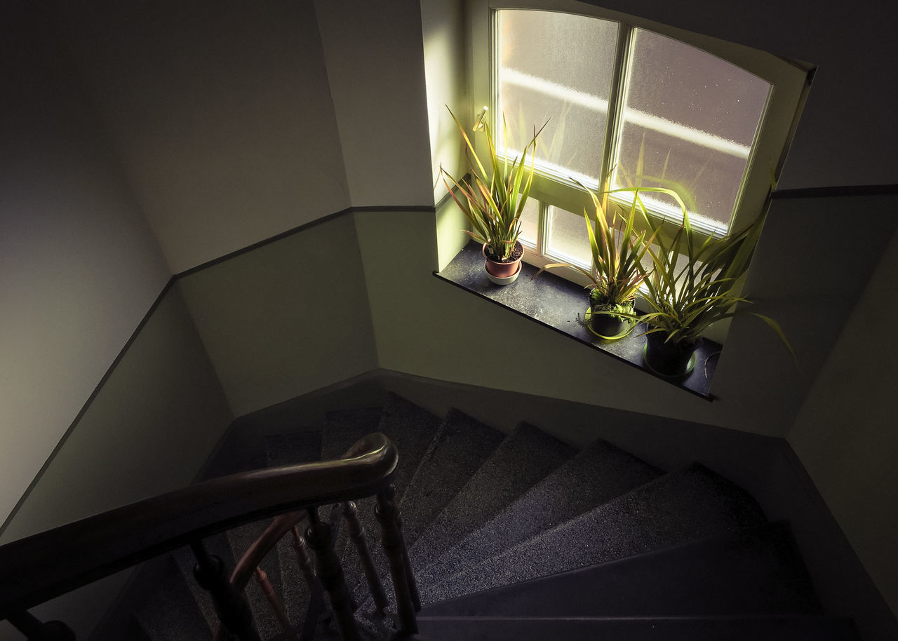 Day Greenery Indoors  Lazy Day Light And Shadow No People Plants Shadow Staircase Windowsill Gardening