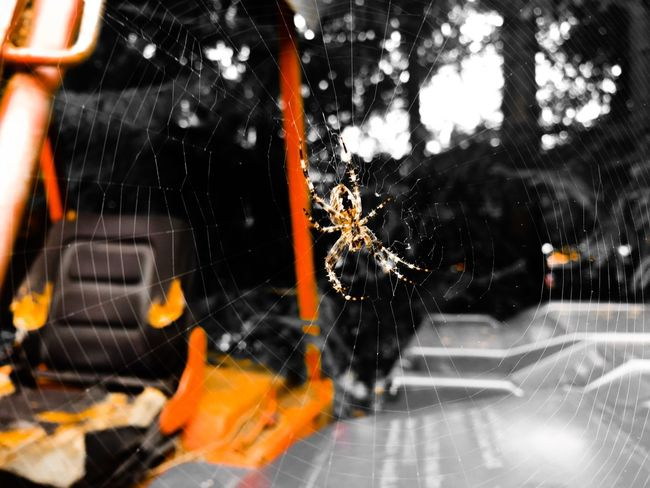 One Animal Animal Themes Close-up Spider Web Wildlife Focus On Foreground Zoology Orange Color Day Animal Hair Beautiful Beauty In Nature Kind Simple Panic Horror Freaking Out Spider Stanleyreagh No People Nature