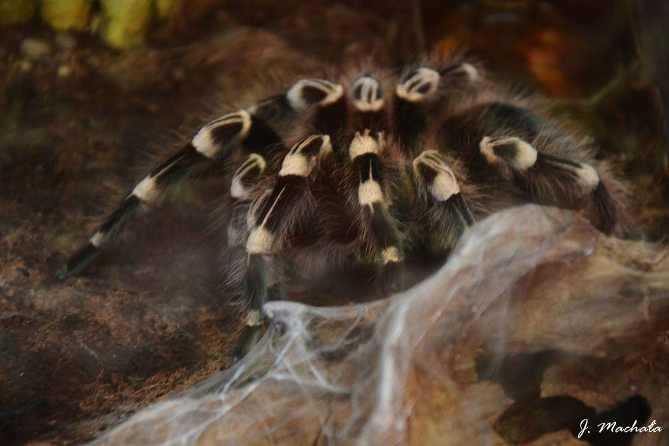 Nature Zoology Nightphotography Spider Relaxing Spiderworld Animals Spiderland Spider Plant Spiders Legs Taking Photos Nikon D3300 Poland First Eyeem Photo Poland 💗 Poland Photos Enjoying Life Bielsko-Biała