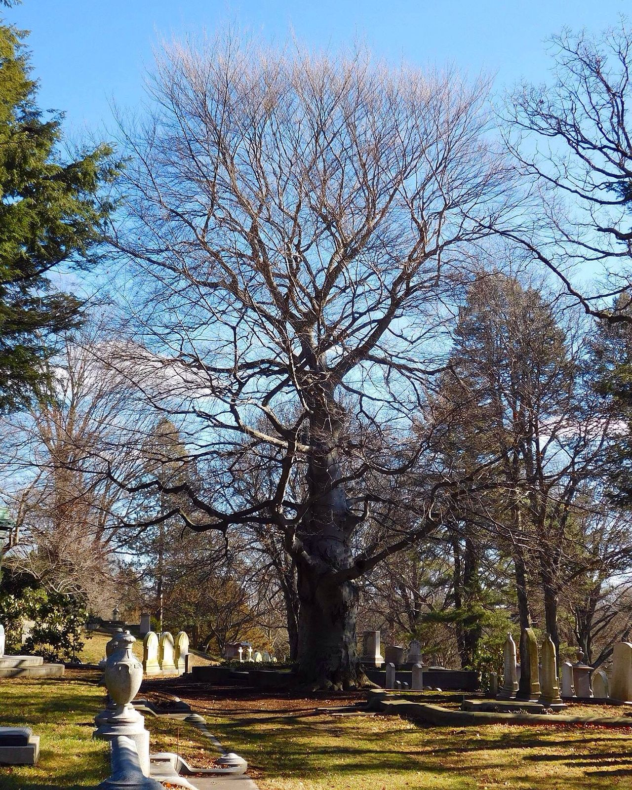 Tree Bare Tree Outdoors Graveyard Beauty Cemetery Photography Graveyard Cemetery_shots New England  Massachusetts Day Tranquility Tree