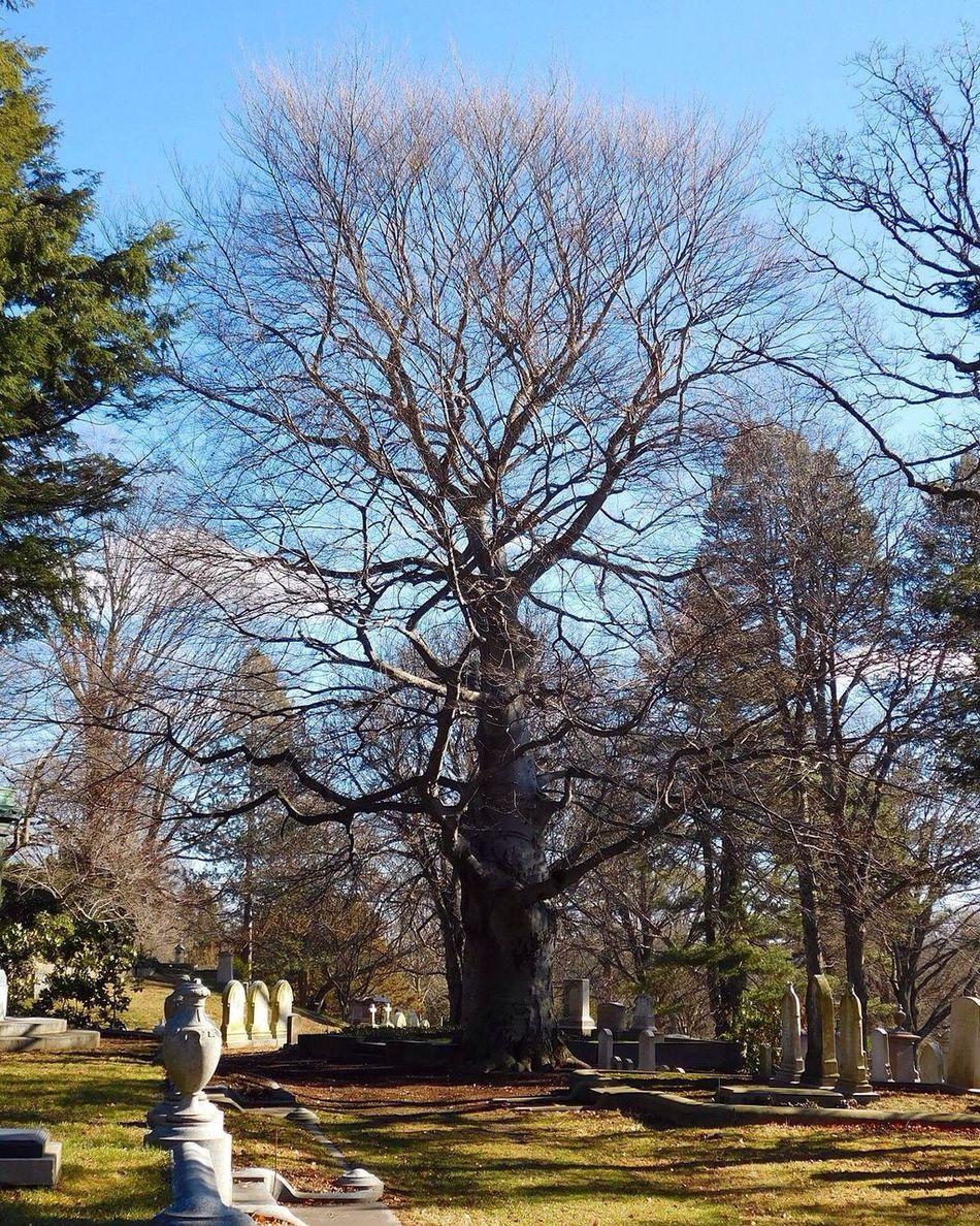 Tree Bare Tree Outdoors Graveyard Beauty Cemetery Photography Graveyard Cemetery_shots New England  Massachusetts Day Tranquility Tree