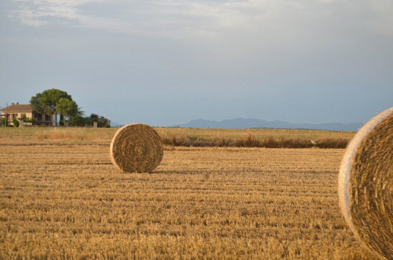 Agriculture Bale  Field Rural Scene Hay Farm Crop  Harvesting Hay Bale Day Tranquility Outdoors Landscape Landscape_Collection Landscape_photography Fields Of Gold Tranquil Scene Sky Nature No People Haystack Cereal Plant Beauty In Nature