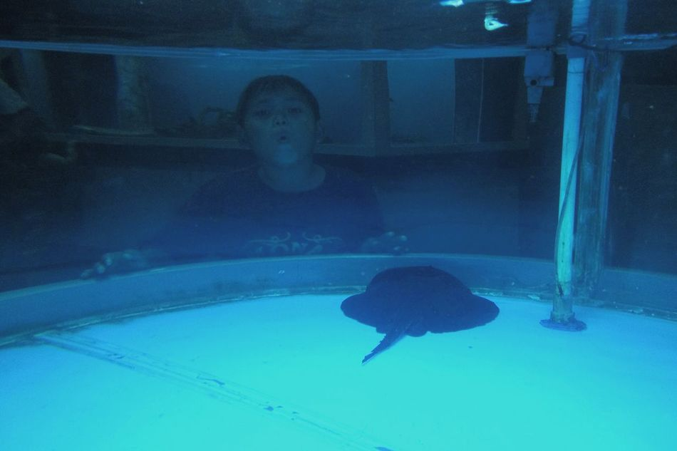 Blue Close-up Water People Indoors  One Person Aquarium Aquarium Life Funny Funny Face Funny Moments One Boy Only One Boy Making Faces